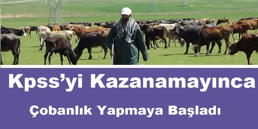 KPSS'ye giren 26 yaşındaki genç  Kpss'yi Kazanamayınca Çobanlık Yapmaya Başladı