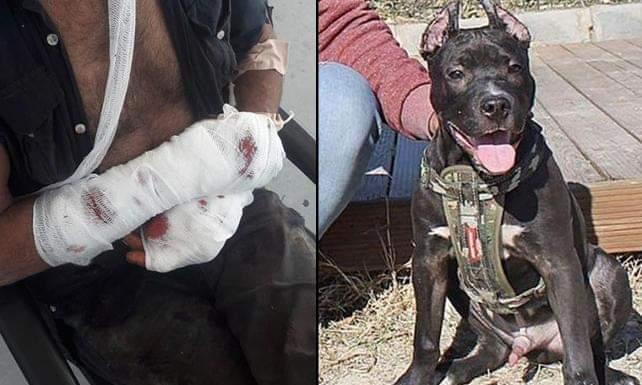 Sahibine saldıran köpeği polis vurarak öldürdü
