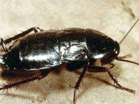 Hamam böceğinden radyasyon geçirmez yelek üretildi