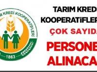 Tarım Kredi Kooperatifleri KPSS'siz ve 60 KPSS ile 45 Memur Personel Alımı
