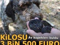Kilosu 3 bin 500 euro! Av köpekleri buldu