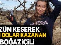 Üzüm Kesiyor 3 Bin Dolar Kazanıyor Yurtdışı iş ilanları