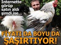 Sivas'taki bu horoz ve tavuklar dev